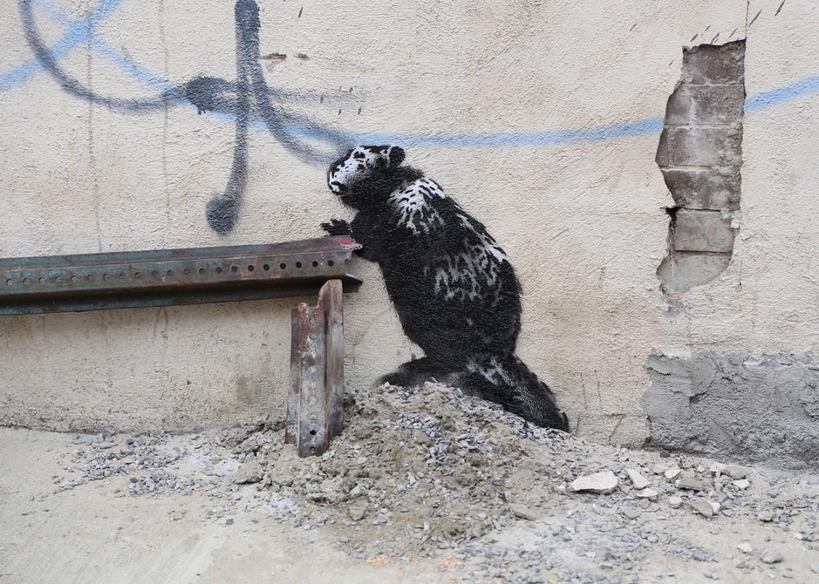 Ratos em Nova York: minha experiência morando em Manhattan