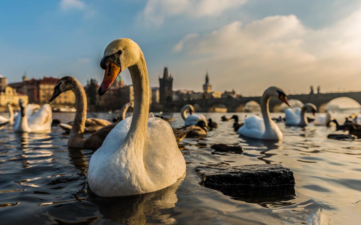 Rodei em Praga, República Tcheca