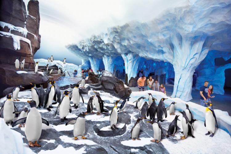 Antarctica-08-Penguin-habitat