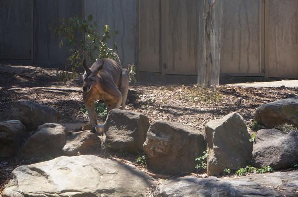 Curiosidades sobre a Austrália: Taronga Zoo