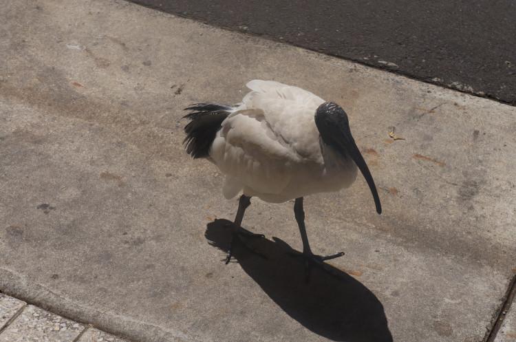 Sydney-Taronga-Zoo-57
