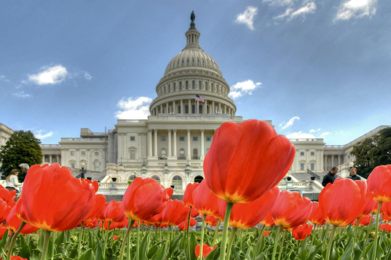 Região da capital dos EUA: como fazer de Washington DC uma super viagem
