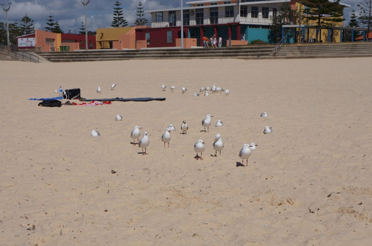 Sydney-Maroubra-Beach-25