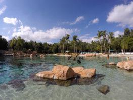O que fazer em Discovery Cove e outras perguntas