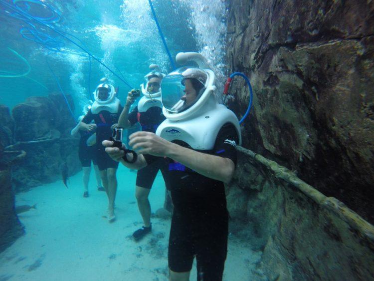 O que fazer em Discovery Cove e outras respostas