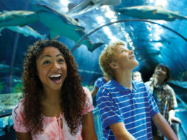 Shark's Underwater Grill de SeaWorld, o restaurante dos tubarões!