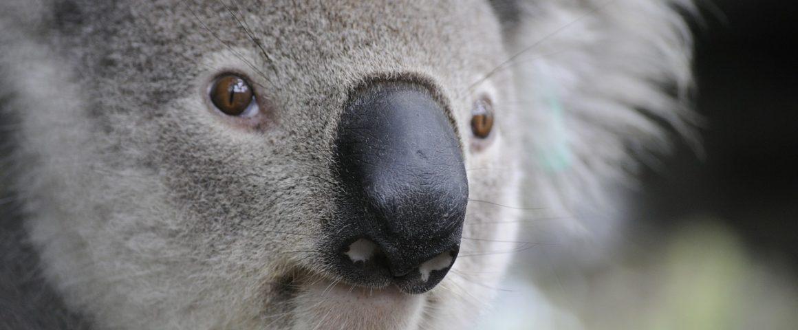 Seguro de viagem para Austrália