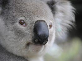 Qual o melhor seguro de viagem para Austrália?